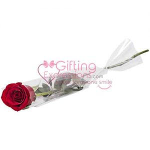 Send Single Stem of Imported Red Rose To Pakistan